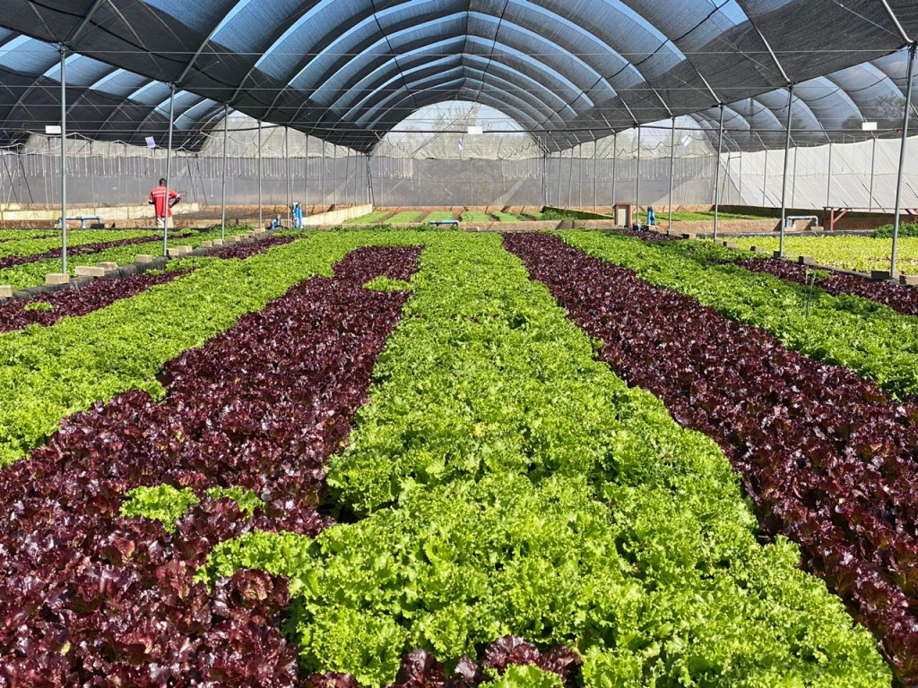 COMMERCIAL AQUAPONICS FARMING